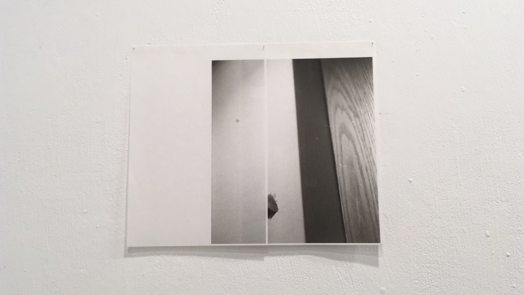 Tamar Lewinsohn_Moth